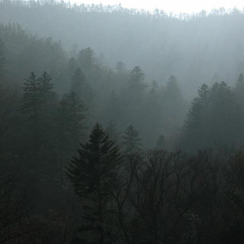오대산 겨울숲