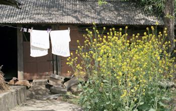 여염집 마당